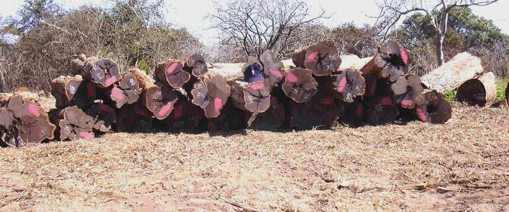 03. A graded logs