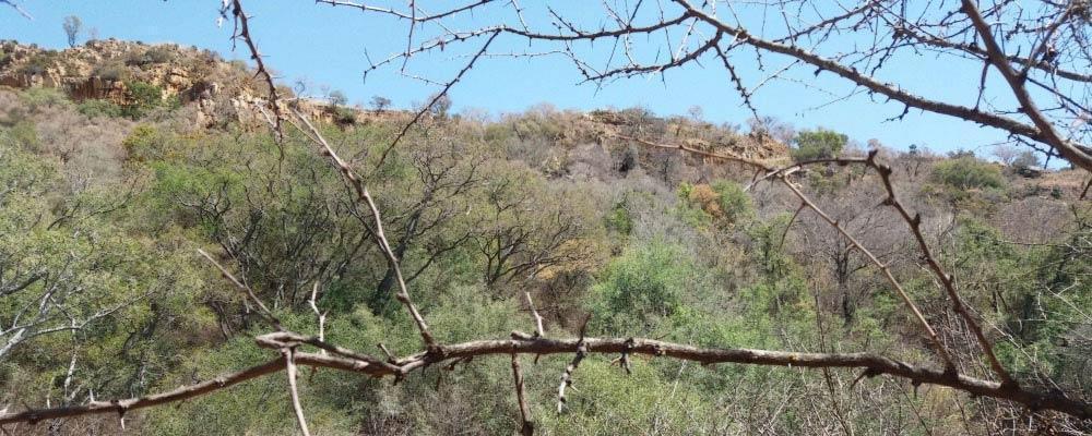 Prosono Africa environment