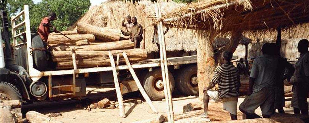 Quality African hardwoods