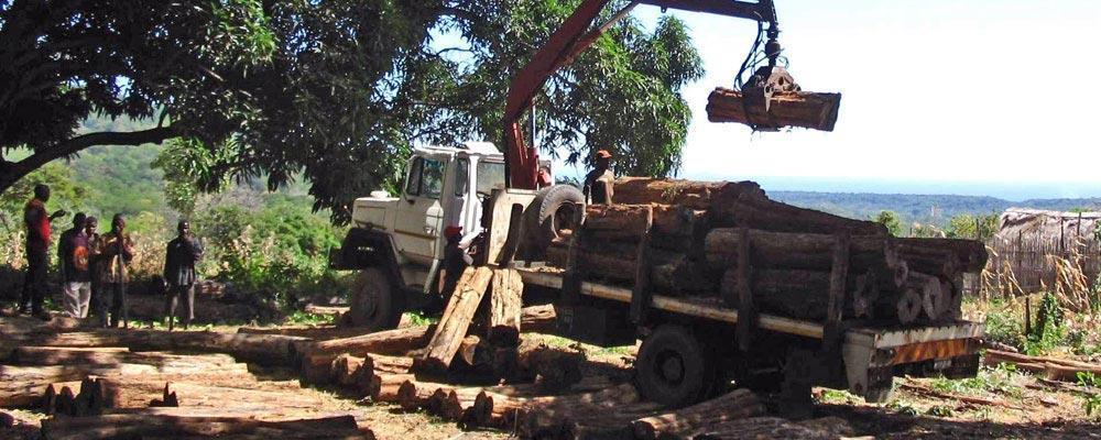 Prosono wood
