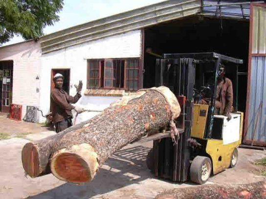 Grume d'Ivoire rose d'une tonne