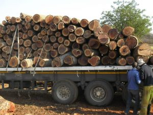 loading mopane wood