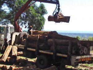 transporting wood Tanzania
